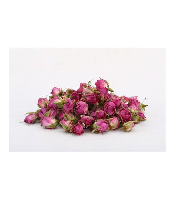 گل محمدی غنچه